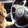 もうエンストなんて怖くない! ネコでも出来る MT車で発進時の半クラッチ操作