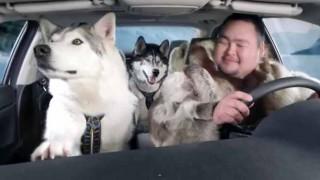 アラスカで犬ぞりレースに出かけて行ったら..  覆面パトに採用されてるスズキキザシをゲット!